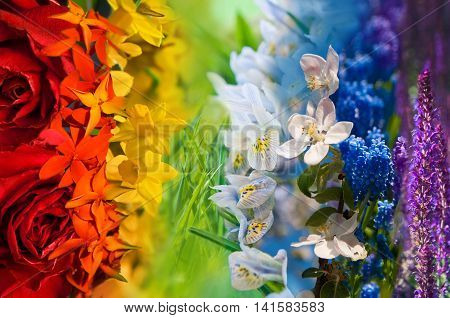 Flower collage - colorful images in rainbow like order