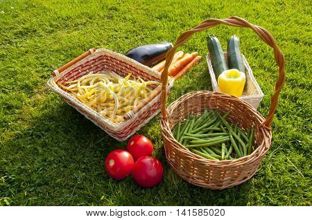 Freshly harvested home grown vegetables lying on grass - beans tomatoes pepper carrots aubergine zucchini