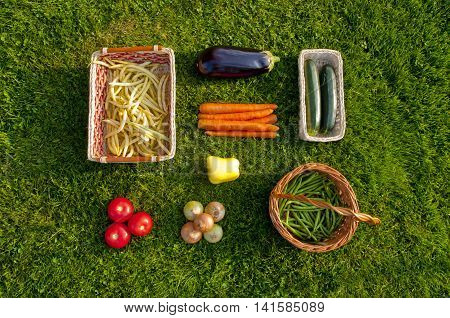 Freshly harvested home grown vegetables lying orderly on grass - beans tomatoes pepper carrots aubergine zucchini onions