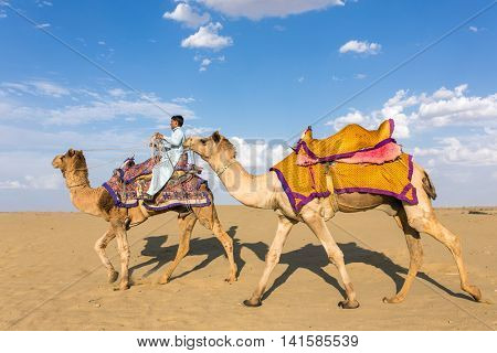 Jaisalmer, India - March 13, 2016: Camels with a rider in Thar desert, Rajasthan, India