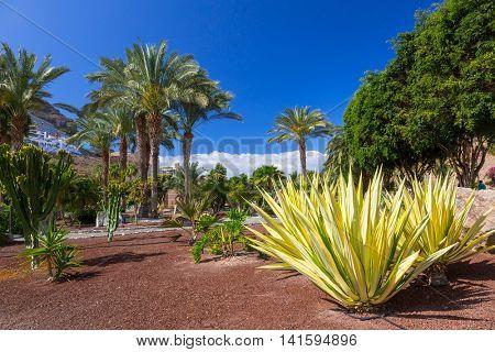 Tropical fauna of Gran Canaria island, Spain