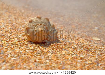 Sea shell over sand and chips pf seashells as background and blurred copyspace.