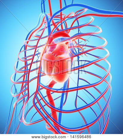 3D Illustration Of Human Internal System - Circulatory System.