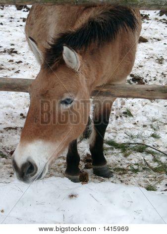 Horse On A Snow