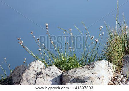green vegetation on white rocks on mountain peak Ai-Petri in Crimea in summer