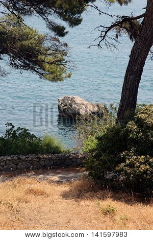 Typical crimean view of Black sea and pine trees in Crimea in summer