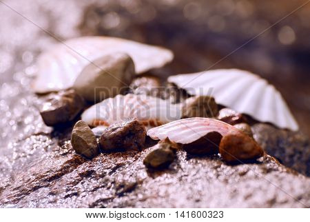 wet seashells and small stones lying on a huge granite wet stone on the beach, on the shore of the river