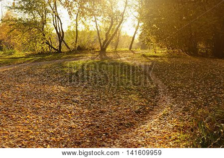 Golden Autumn in a Sun Lit Park. Path, Grass and Foliage.