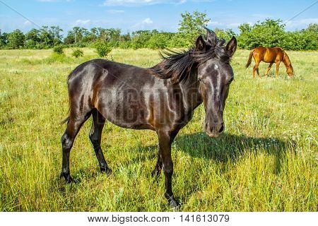 Beautiful foal on pastures country summer landscape