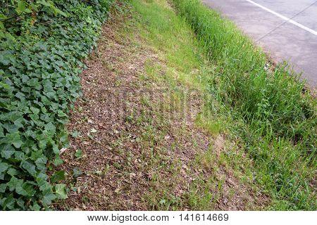 Berm on the side of the street freshly mowed