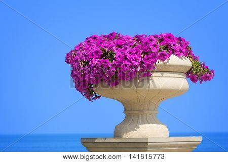 A vase of pink petunia flowers over the sea
