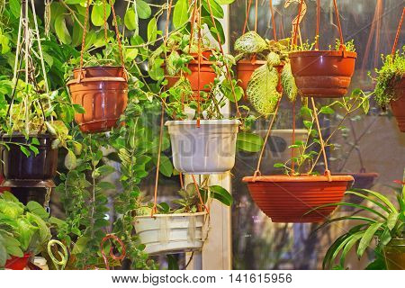 Different indoor potted decorative plants interior: many pots