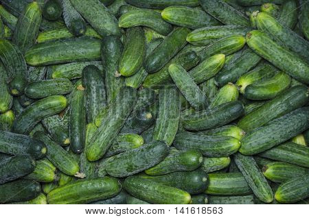 group of fresh cucumbers in a super market