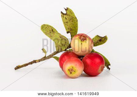 Forest Fruit Closeup