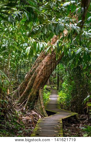 Trail in the rain forest, Bako National Park, Sarawak, Malaysia