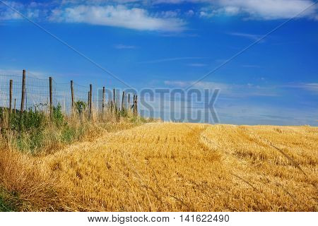 harvested cornfield with fence in midsummer with sunshine and blue sky