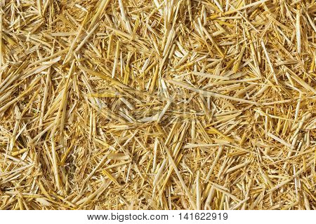 harvested cornfield as closeup for background and textures