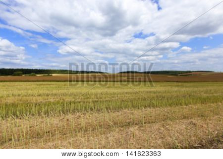 agricultural field, which collect ripe canola crop farming summer, Defocus