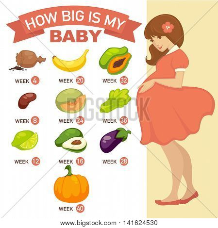 How big is my baby. Pregnancy infographic concept illustration. Vector design