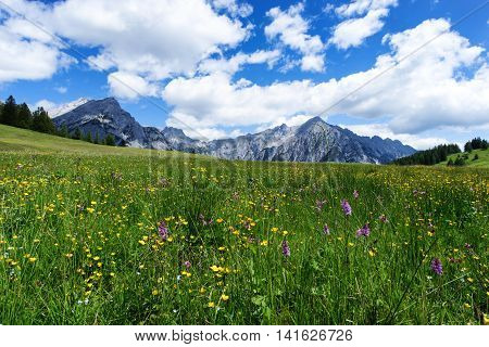 Blooming meadow flowers in spring time with blue sky and cumulus clouds in the Austrian Alps
