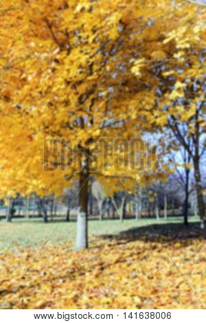 photographed close-up of yellowed and fell to the ground leaves of the trees, defocus