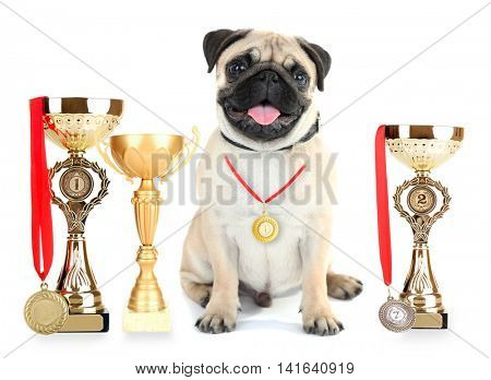 Funny, cute and playful pug dog with trophy cups and medals isolated on white