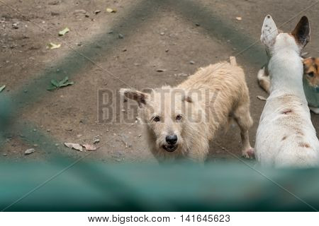 Group of stray dogs in the Foundation