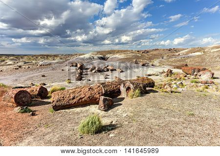 Crystal Forest - Petrified Forest National Park