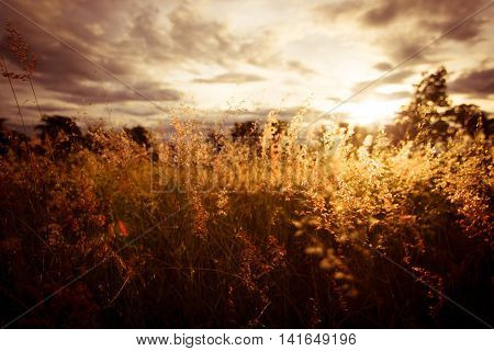 Sunset or sunrise over grass fields ,countryside landscape