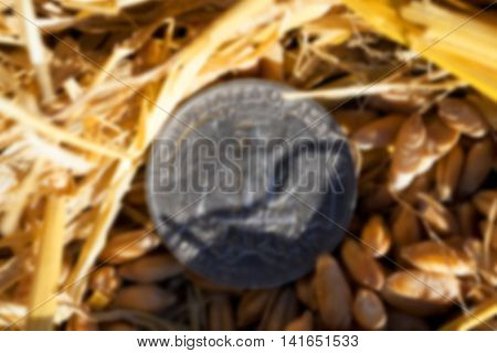 photographed close-up of an American coin in 25 cents in a pile of straw left after harvest, defocused