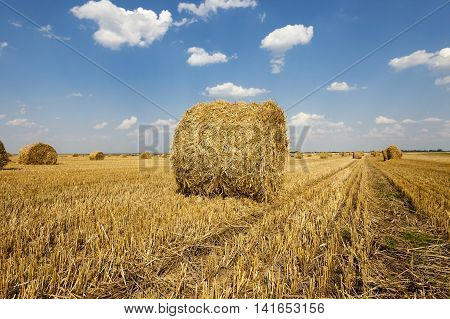 straw bales stacked in during the harvest of cereals
