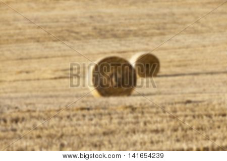 Agricultural field on which were left lying Straw Haystacks after the wheat harvest, grain field, farming and organic foods, autumn season, defocus