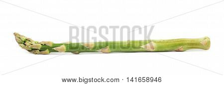 Single spear of the green asparagus isolated over the white background