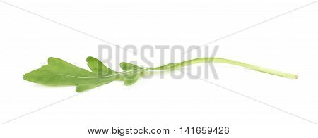 Single green rucola rocket salad leaf isolated over the white background