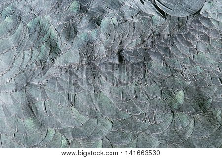 Extreme Close-up Of Feathers Of An Marabu