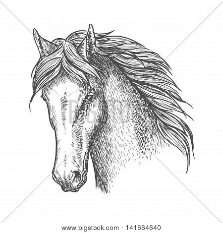 Purebred horse head sketch icon. Riding club and horse racing symbol or t-shirt print design