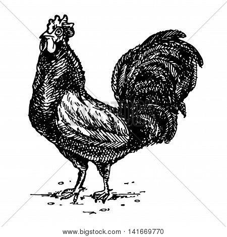 Cock Year 2017