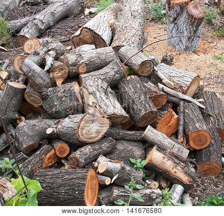 pile of firewood close-up on a cloudy day.