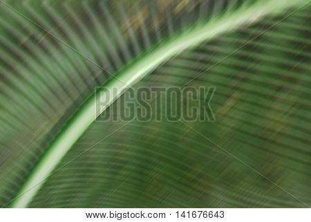 Abstract nature wavy background of green curves