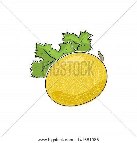 Melon Isolated on White, Fruit Melon, Vector Illustration