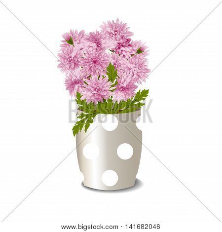 Bush of pink chrysanthemums in a flowerpot isolated on white background, vector illustration