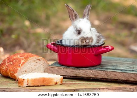 Cute baby rabit in small red pot among the food. Little bunny looks for a tasty meal