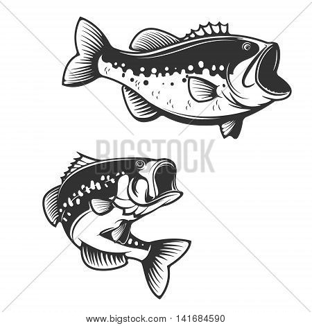 Sea bass fish silhouettes isolated on white background. Design elements for logo label emblem for fishing club. Vector illustration.