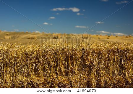 Golden Hay Bales And Hay Roll