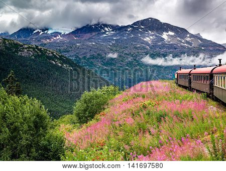 Passenger train moving through a field of pink and red wildflowers with a glacier in the background near Skagway AK