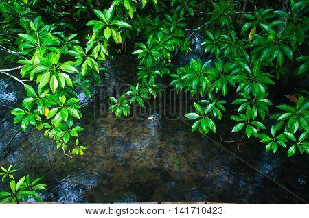 Khlong Song Nam clear tropical stream Krabi Thailand