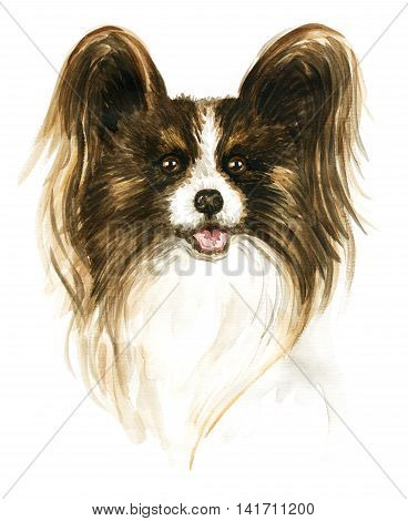 The dog Papillon. Image of a thoroughbred dog. Watercolor painting.