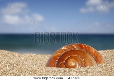Beach Snail