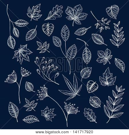 Chalk sketches of tree branch, leaf, seed and inflorescence of wild herbs. Floral decoration and botanical theme design