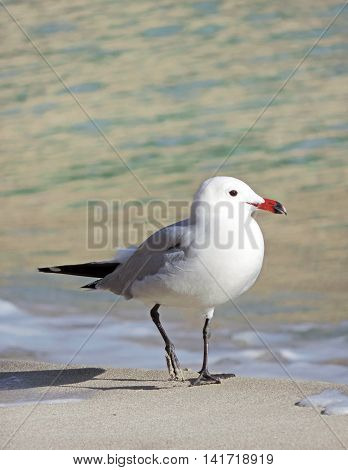 seagull, bird, sea, nature, blue, wing, sky, white, summer, animal, flying, sun, water, gray, wave, outdoors, yellow, beach, wildlife, bay, high up, sea bird, beauty in nature, sunlight, vacations, coastline, travel, travel destinations, water's edge, tra